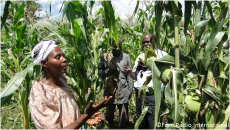 Ansiira Nyirabagenzi inspects her new crop of Quality Protein Maize in Nyabugando, Western Uganda. Photo: Harriet Adong / Farm Radio International